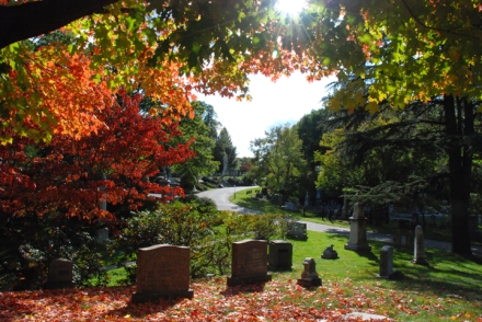 sugar-maples-at-mount-auburn-cemetery