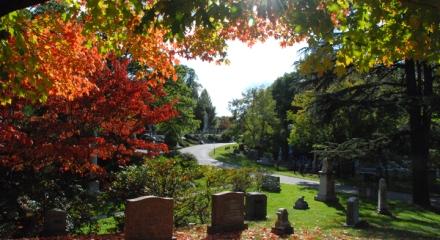 sugar-maples-at-mount-auburn-cemetery